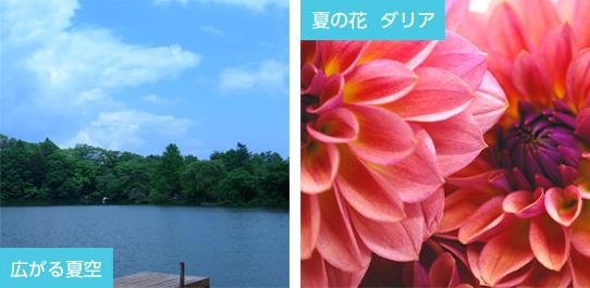 広がる夏空 夏の花 ダリア