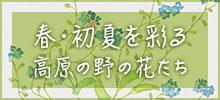 「春・初夏を彩る高原の野の花たち」展