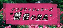 イングリッシュローズ 薔薇の祭典