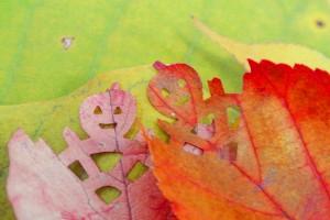 木の葉隠れ